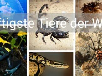 giftigste tiere der welt